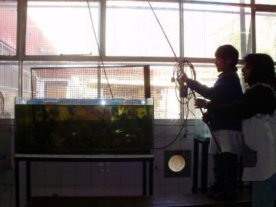 Aprendimos cómo nadan los peces: moviendo las aletas y la cola para tener equilibrio