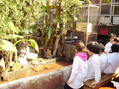 Y durante el recreito... además de comer cosas ricas, vimos los gansos, tortugas, pavos...